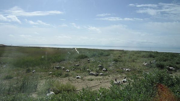 苗圃鎮洋單車助學行2010 –『青海湖之旅』041.jpg