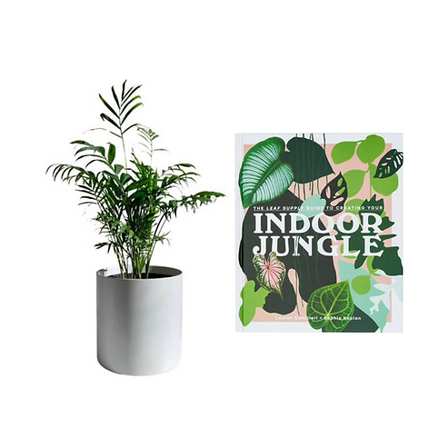 Indoor plant delivery melbourne plant gifts