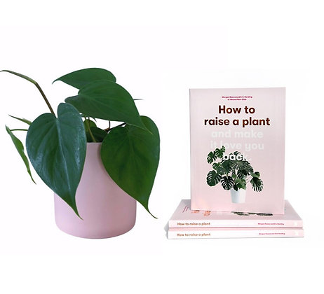 FLOWERBABY PLANTS & BANTS (FOR THE NEW PLANT PARENT)