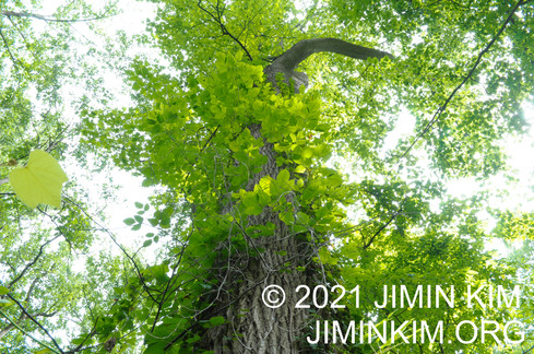Photo was taken at Shu Swamp Preserve, Mill Neck, New York on June 26, 2021.