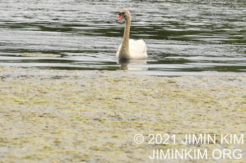 Photo was taken at Twin Lakes Preserve, Wantagh, New York on June 13, 2021.