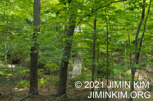 Photo was taken at John P. Humes Japanese Stroll Garden, Mill Neck, New York on June 26, 2021.