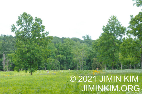 Photo was taken at the Humes Preserve, Mill Neck, New York on June 26, 2021.