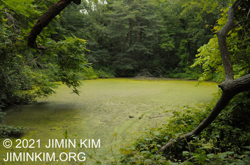 Photo was taken at Welwyn Preserve in Glen Cove, New York on July 17, 2021.