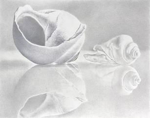"""Lowell Tolstedt """"Seashells with Reflections"""", 2015 Goldpoint and silverpoint 6 ½ x 6 inches $2,150"""