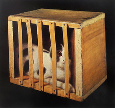 """Stanley S. David """"Cat in a Crate"""", c. 1887 Oil on canvas 10 1/8 x 12 1/8 inches Signed lower right: S.S David"""