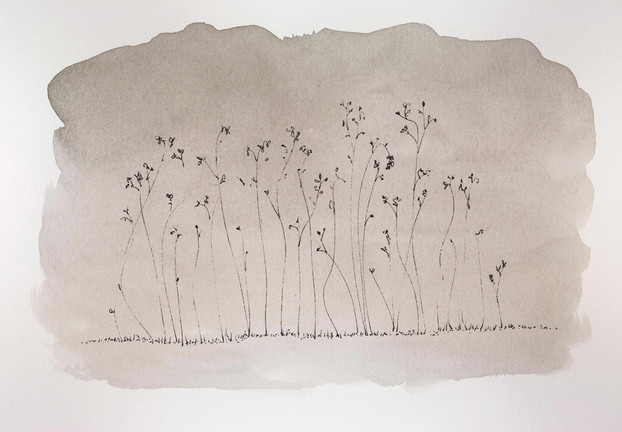 Marc Lincewicz 'The Edge of the Prairie' Ink wash and pen on paper 5 x 7 inches $800