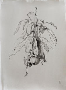 """Mary Jane Ward """"Apple With Leaves"""", 2019 Charcoal, graphite, ink wash on paper 15 x 11 inches $760"""