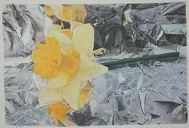Lowell Tolstedt 'Composition with Daffodil', 2006 Color pencil 14 3/4 x 21 3/4 inches  Sold