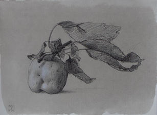 """Mary Jane Ward """"Apple Leaning Right"""", 2019 Charcoal, graphite, chalk, ink wash on paper 5 ½  x 7 ½ inches Sold"""