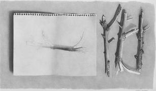 """Lowell Tolstedt """"Branches with Branch Study"""", 1983 Graphite 8 ¾ x 14 ¾ inches $3,900"""