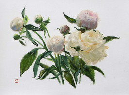 """Mary Jane Ward 'Tracy's Peonies (Pink and White Peonies)' Oil on paper. 11"""" x 14"""" 2019  $700"""