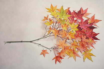 """Lowell Tolstedt """"Broken Branch with November Leaves"""", 2020 Colored pencil 35 x 52 inches   $16,500"""