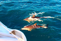 Sailng holidays - Whale and dolphin watching on board the Norda