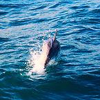 WestOnBoats - Vacances en voilier - L'observation des cétacés est au coeur des croisières de WestOnBoats aux Canaries et en Ecosse! Règles à respecter lors d'interactions avec baleines et dauphins en Ecosse et aux Canaries