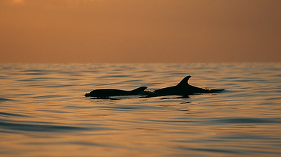 Sailing holidays on board the Norda including whale and dolphin watching