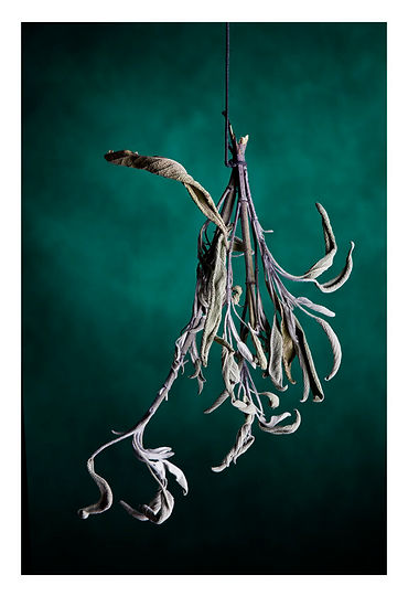©DonSalaImages- Dried-Sage-How quickly-t