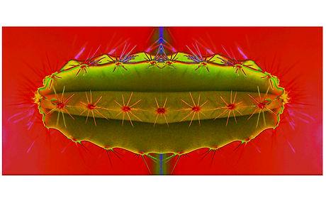 Reg Ziemann Hot Cactus.jpg