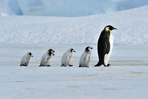 Penguins at Snow Hill Antartica.jpg
