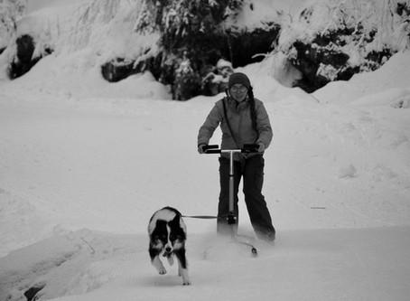 #La cani-patinette