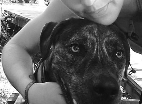 La traversée des Pyrénées avec son chien