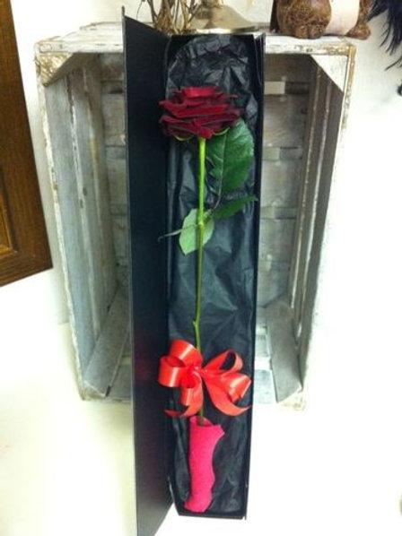 Single Rose & Gift Box
