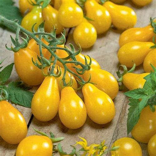Tomato, Yellow Pear Cherry