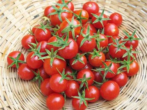 Mewaldt - Tomato Red Cherry