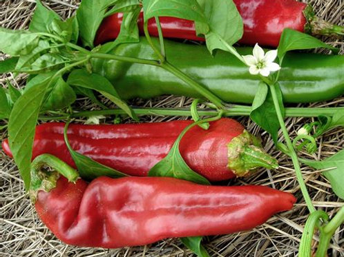 Pepper, Chile Big Jim