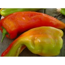 Mewaldt - Giant Aconcagua Sweet Pepper