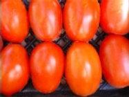 Mewaldt - Tomato Korena Roma