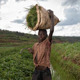 Child labour, Rwanda