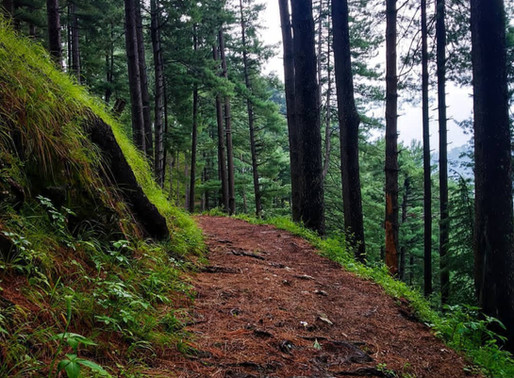 Trail Safety Tips While Hiking During the Coronavirus Pandemic 2020