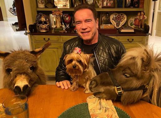 Arnold Schwarzenegger Quarantines with Whiskey the Mini Pony & Lulu the Donkey