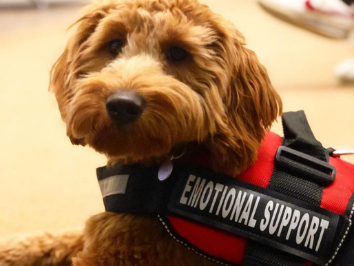 American Airlines Will No Longer Allow Emotional Support Animals Starting Next Week