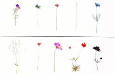 Wild Flowers Sewn onto Canvas 🙏__#press