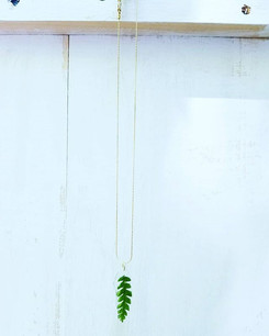 The top of a large fern 💚_#simplybeauti