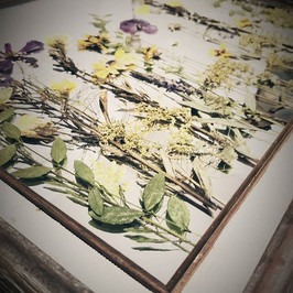 Dreaming of a field of wild flowers on this snowy day!🌿#pressedbyag #pressedflowers #createwhatyoulove