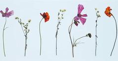 Dancing Wild Flowers 🌼💚 #pressedbyag #
