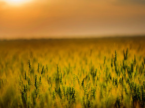 21 DAYS OF FAITH - DAY 21 - SOWING IN TIMES OF FAMINE