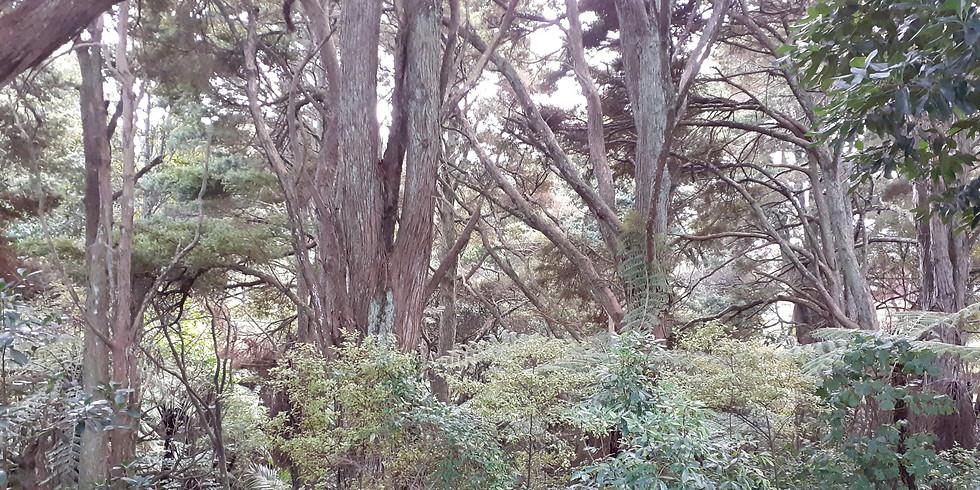 Totara Heights Bush Reserves Clean-up