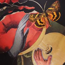 Twilight Moth