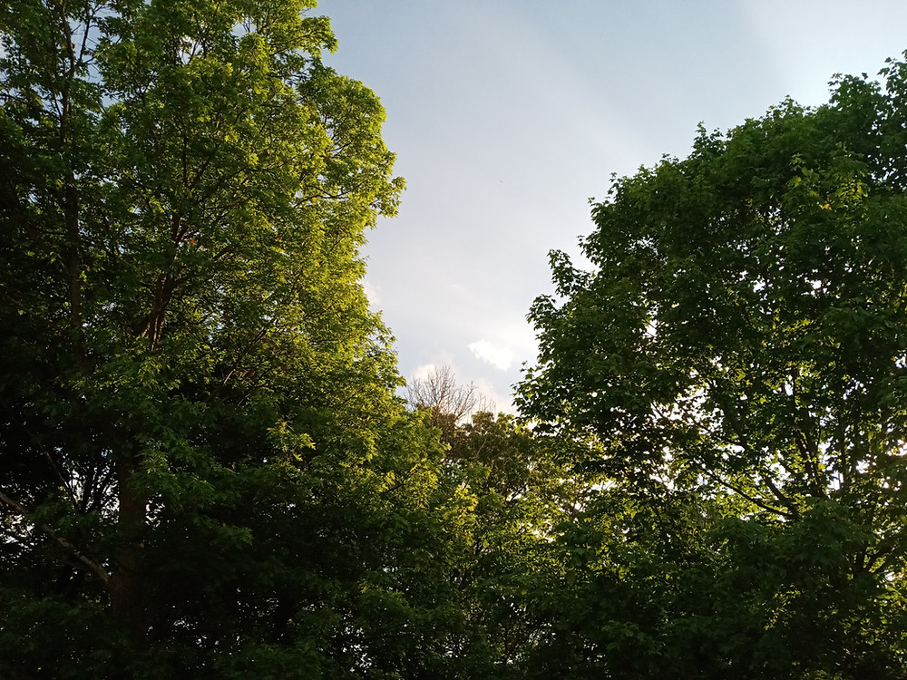 Trees and a beautiful sky