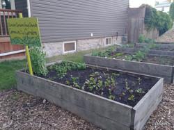 More box gardens ...