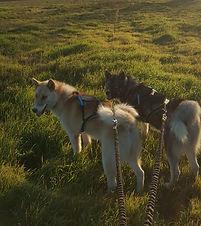 Cani-Randonnée avec Terre Sauvage
