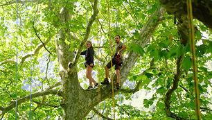 Voyages d'arbres en arbres