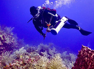 Lionfish Huntng with Calypso Charters, Riviera Maya, Mexico