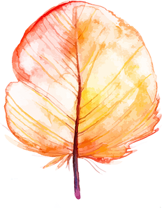 feather 6.png