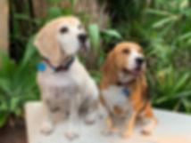 new dog pic.jpg
