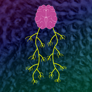 What is the Vagus Nerve?
